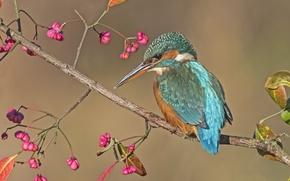 Wallpaper bird, branch, Kingfisher, brushline