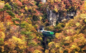 Picture autumn, forest, train, the tunnel