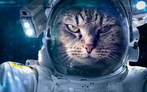 Wallpaper space suit, cat, fantasy