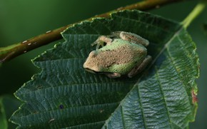 Picture nature, sheet, frog