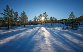 Picture winter, forest, the sky, the sun, rays, snow, trees, dawn