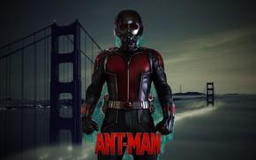 Picture cinema, man, movie, hero, film, Avengers, uniform, seifuku, Ant Man, Ant-Man