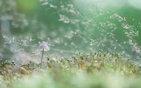 Picture grass, macro, mushroom, bokeh