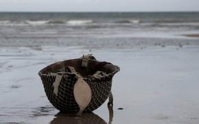 Picture sea, mesh, shore, helmet, helmet
