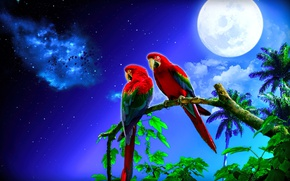 Picture the moon, parrots, dereja, night star