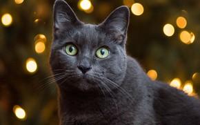 Picture cat, portrait, muzzle, look