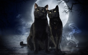 Picture cats, night, rendering, black, the moon, cats, art, ghosts