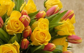 Picture flowers, roses, bouquet, yellow, tulips