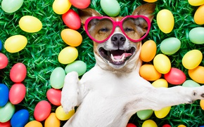 Picture grass, dog, colorful, glasses, Easter, hearts, happy, dog, spring, Easter, eggs, holiday, funny, the painted …