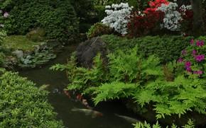 Picture greens, stream, fish, carp, the bushes, Azalea, koi