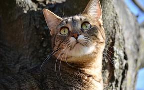 Picture Tree, Cat, Tree, Cat