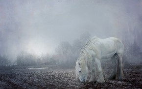 Picture winter, frost, field, white, light, snow, trees, landscape, fog, horse, dawn, horse, morning, hairy, village, ...