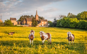 Picture field, summer, the sky, clouds, trees, landscape, flowers, nature, house, castle, mood, horses, spring, yellow, ...