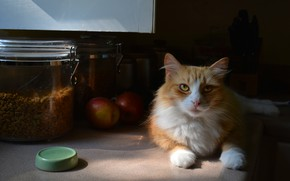 Picture cat, cat, look, face, light, comfort, house, apples, food, fluffy, red, kitchen, lies, banks, cover, …