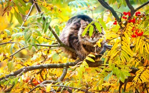 Picture on the branch, Rowan, fluffy cat