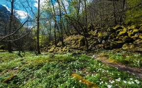 Picture grass, the sun, trees, flowers, mountains, stones, moss, spring, valley, Norway, snowdrops, flowering, Rogaland, Forsand