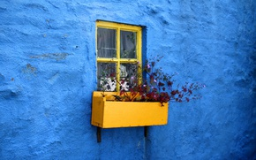Wallpaper blue, ciety, window, wall, flower garden, plaster, minimalism