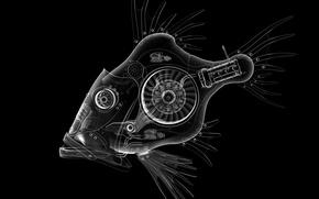 Picture fish, details, the contours