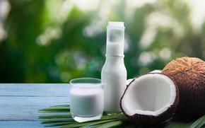 Picture coconut, milk, milk, coconut, coconut milk, coconut milk