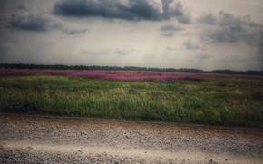 Picture field, flowers, beauty, wildflowers