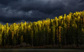 Picture autumn, forest, the sky, light, clouds, shore, ate, lighting, beautiful, pond, Christmas trees, gloomy sky, …