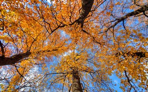 Picture autumn, the sky, leaves, trees, trunk