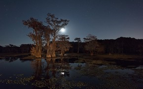 Picture night, river, the moon