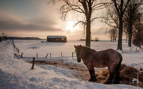 Picture winter, the sky, the sun, clouds, light, snow, trees, landscape, horse, horse, the fence, village, …