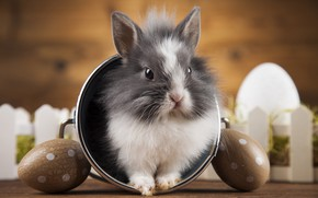 Picture holiday, eggs, rabbit, bucket