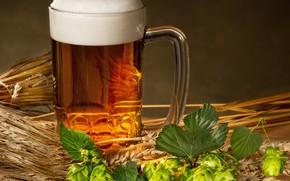 Picture foam, beer, mug, ears, hops