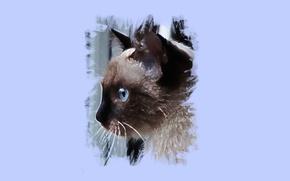 Wallpaper cat, eyes, look, art
