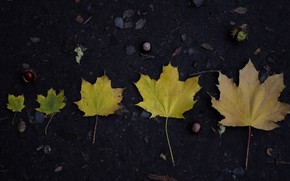 Picture autumn, leaves, nature, life, beautiful, maple, chestnut, age