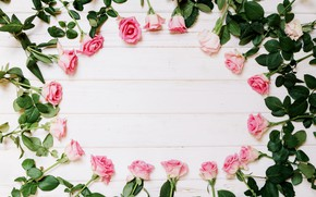 Picture flowers, roses, white background, buds