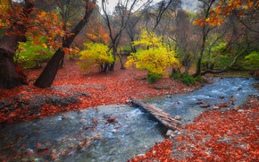 Wallpaper leaves, forest, stream, nature, the bridge, the foothills, autumn