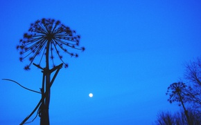 Picture The sky, Black, Night, Grass, Trees, The moon