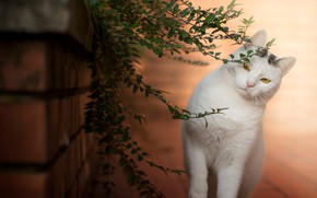 Picture leaves, beauty, kitty