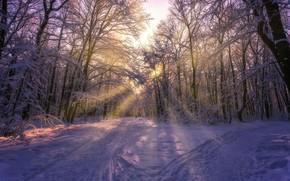 Picture winter, the sun, rays, snow, trees, photo, Aleksei Malygin