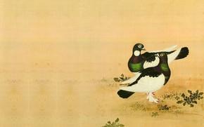 Picture bird, figure, dove, art, China