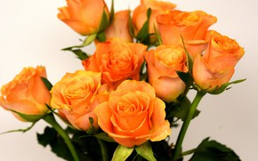Picture roses, bouquet, yellow, roses