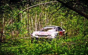 Picture Trees, Forest, Sport, Race, Peugeot, Lights, Red Bull, Rally, Rally, Sport, DKR, 3008, Silk road, …