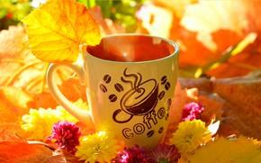 Wallpaper Flowers, Autumn, Leaves, mug, Fall, Flowers, Autumn, Leaves