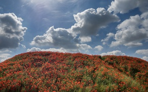 Picture summer, the sky, grass, the sun, clouds, flowers, Maki, hill, red
