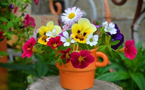Picture Flowers, Flowers, Colors, A pot of Flowers, Viola
