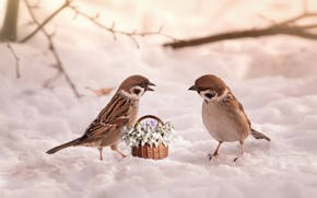 Picture snow, flowers, birds, snowdrops, basket, sparrows, March 8