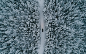 Wallpaper forest, machine, trees, road, nature, winter, snow, the view from the top