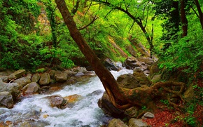 Picture Stream, Spring, Forest, Stones, River, Spring, River, Forest, Flow