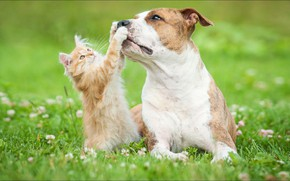 Picture game, cat, dog, two, animal, friendship