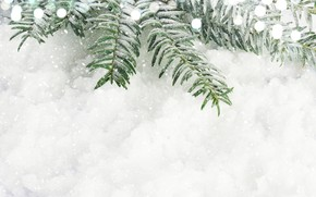 Picture snow, new year, spruce, branch