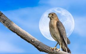 Wallpaper the moon, branch, bird