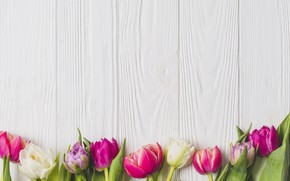 Wallpaper flowers, spring, colorful, tulips, Board, wood, pink, flowers, tulips, spring